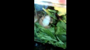 La rana en el interior de la ensalada