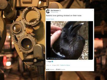 ¿Es un conejo o un cuervo?