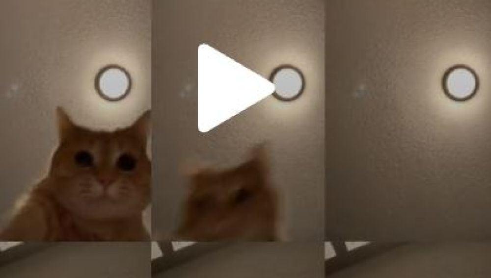 Ed, el gato que se ha hecho viral en Tik Tok
