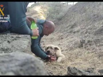 Dos guardias civiles rescatan a un perro exhausto en el incendio de Gran Canaria
