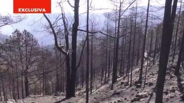 Devastación en el Parque Natural de Tamadaba
