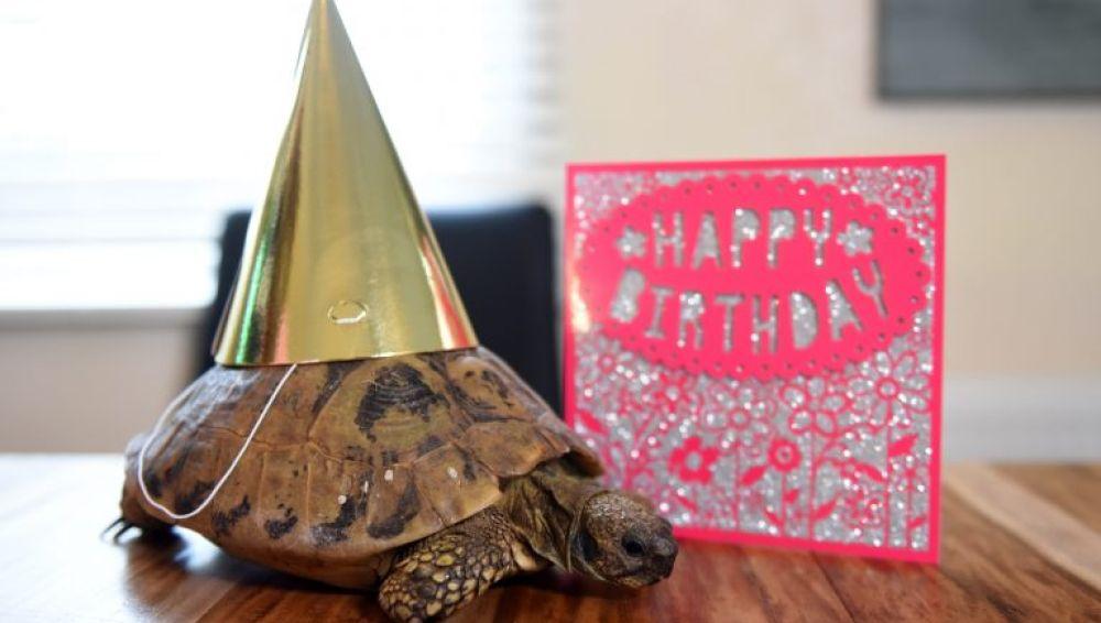 Cumpleaños de la tortuga más vieja de Inglaterra