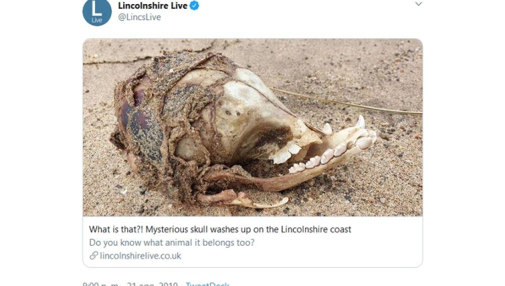 Misteriosa calavera en una playa del Reino Unido