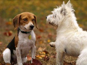 Los cerebros de perros de diferentes razas son distintos