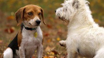 Elecciones generales 2019: Los cerebros de perros de diferentes razas son distintos