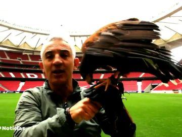 Moncloa ficha a los halcones del Wanda para espantar las palomas