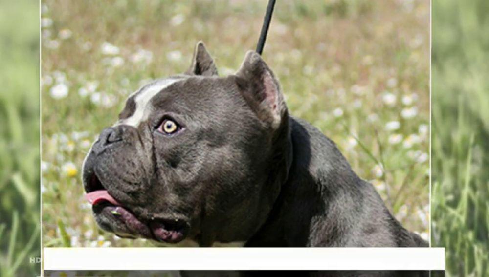 Siete clínicas cuentan ya con bancos de esperma para perros