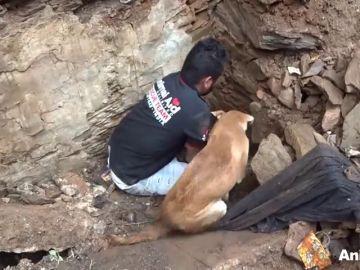 El desesperado rescate de un perro a sus cachorros tras el derrumbe de una casa