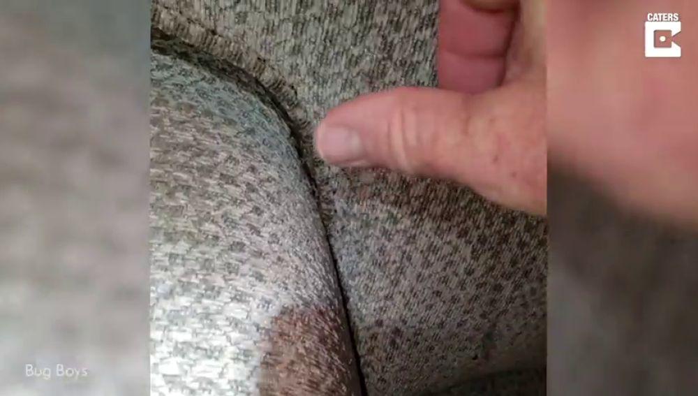 VÍDEO: Este sofá está tan infestado de chinches que no podrás mantener la mirada