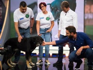 Keko, un perro al que le clavaron un mosquetón, busca un nuevo hogar en 'El Hormiguero 3.0'