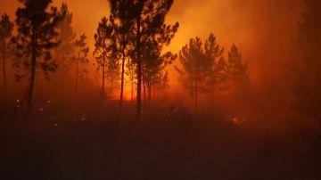 Un incendio arrasa 440 hectáreas en A Gudiña, Ourense