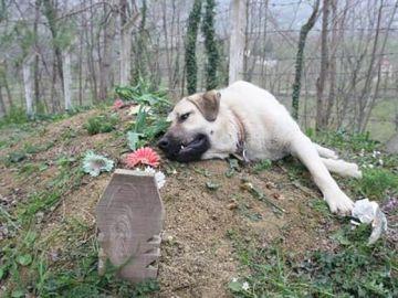 Imagen del perro que visita la tumba de su dueño desde hace cinco años