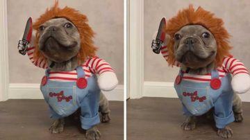 Perro disfrazado de Chucky