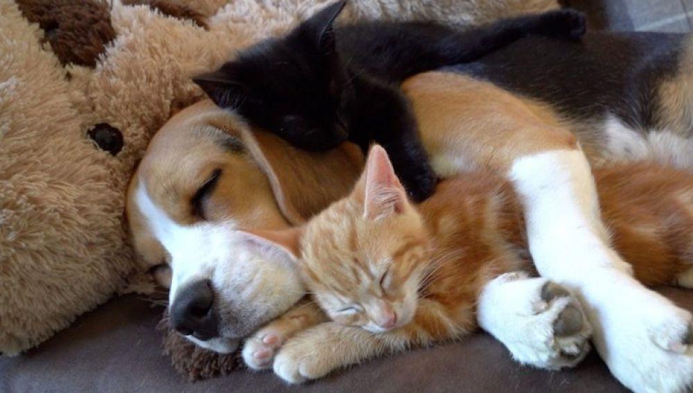 Perra adopta dos gatitos