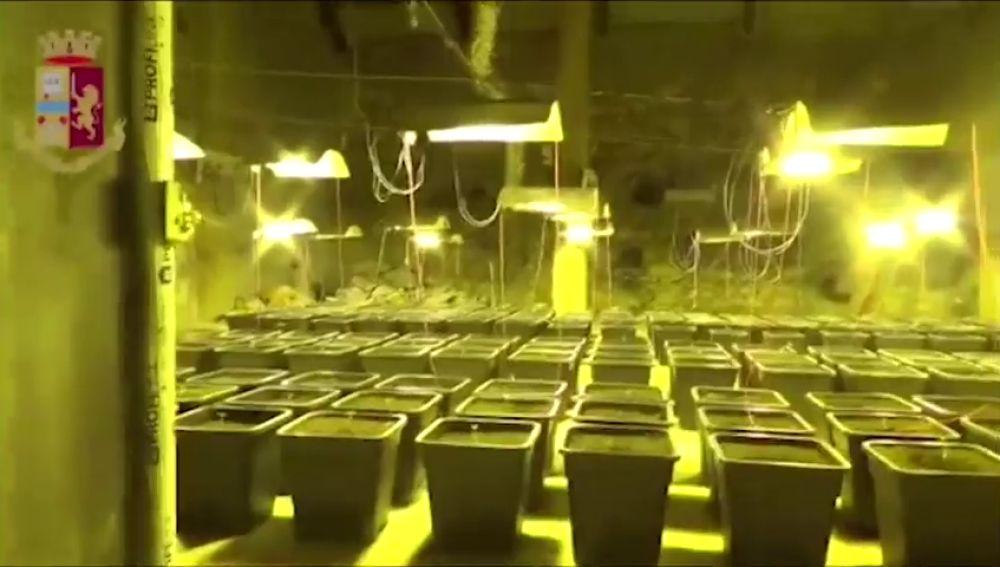 Encuentran una enorme plantación de marihuana en el baño de una casa en Cagliari, Italia