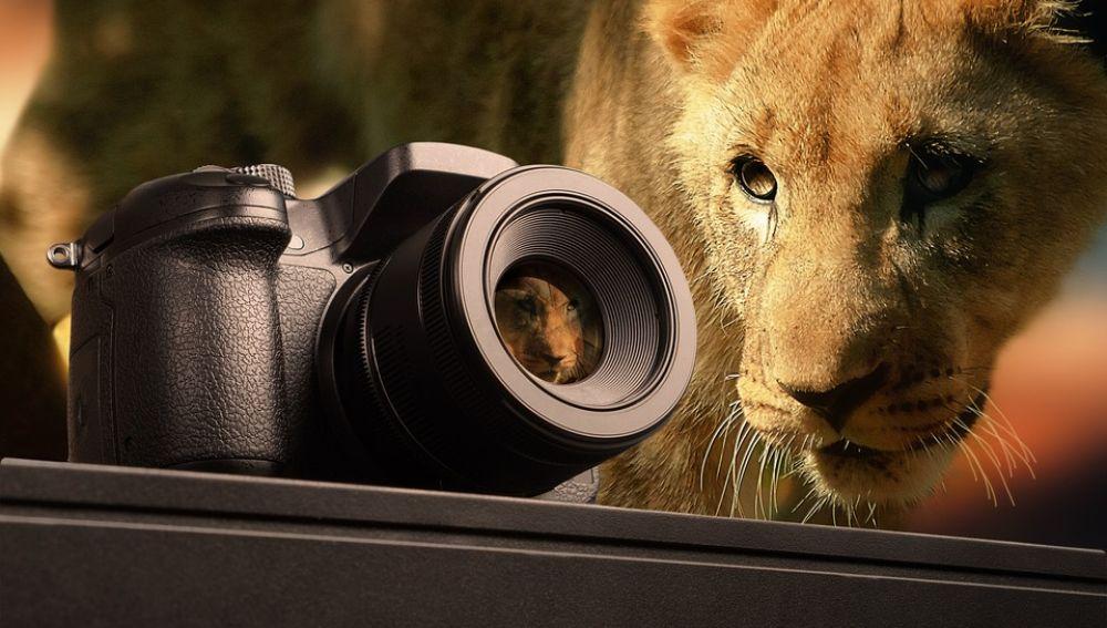 Fotografía de fauna salvaje (archivo)