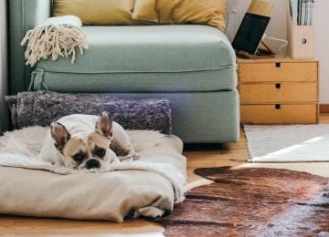 Cuando dejas solo en casa a tu perro