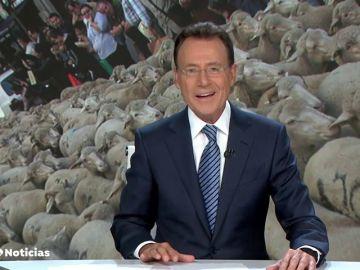 """La graciosa confusión de Matías Prats llena Madrid de """"medio millón de ovejas"""""""