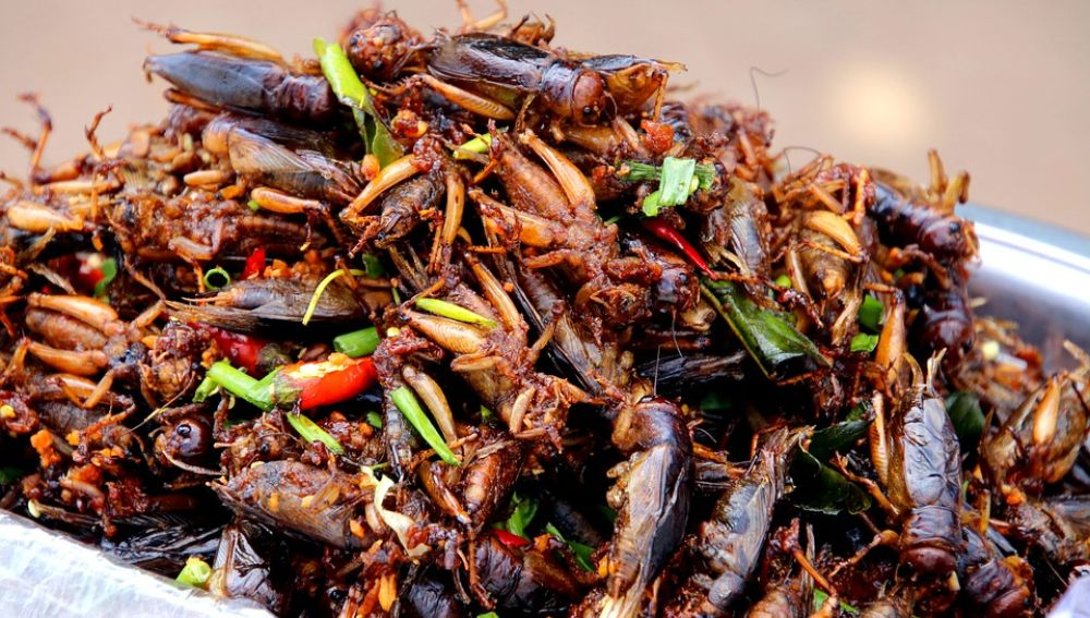 Cucarachas (archivo)