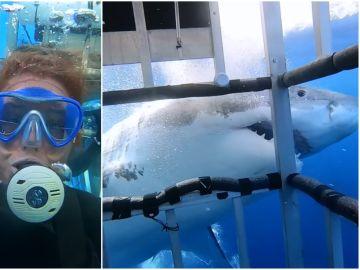 Un tiburón blanco ataca una jaula con 14 mujeres