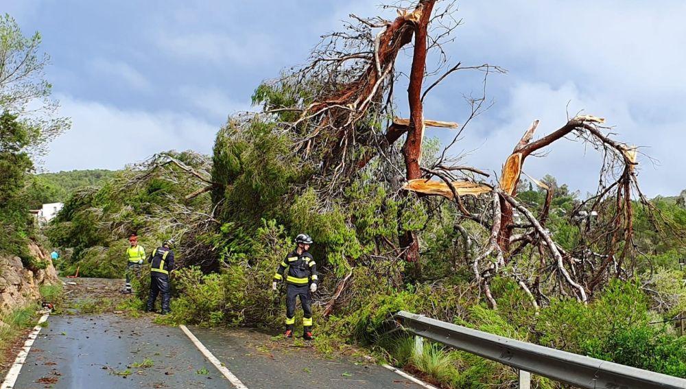 Árbol caído en una carretera de Ibiza