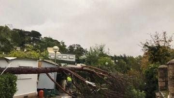 La caída de un árbol en un cámping en Gualba por los efectos de la DANA