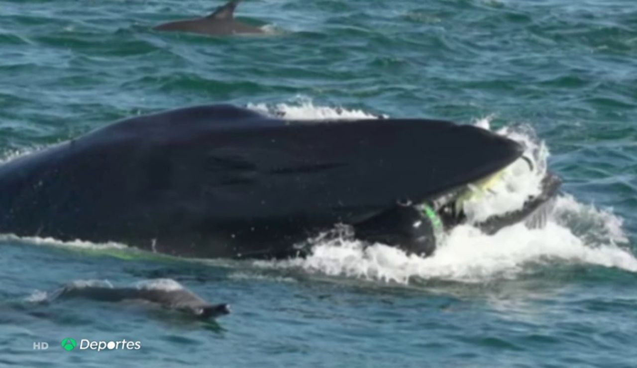 """El submarinista Rainer Schimpf cuentá cómo fue engullido por una ballena en Sudáfrica: """"Si llega a ser un tiburón..."""""""