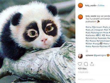 Instagram de Koty Vezde