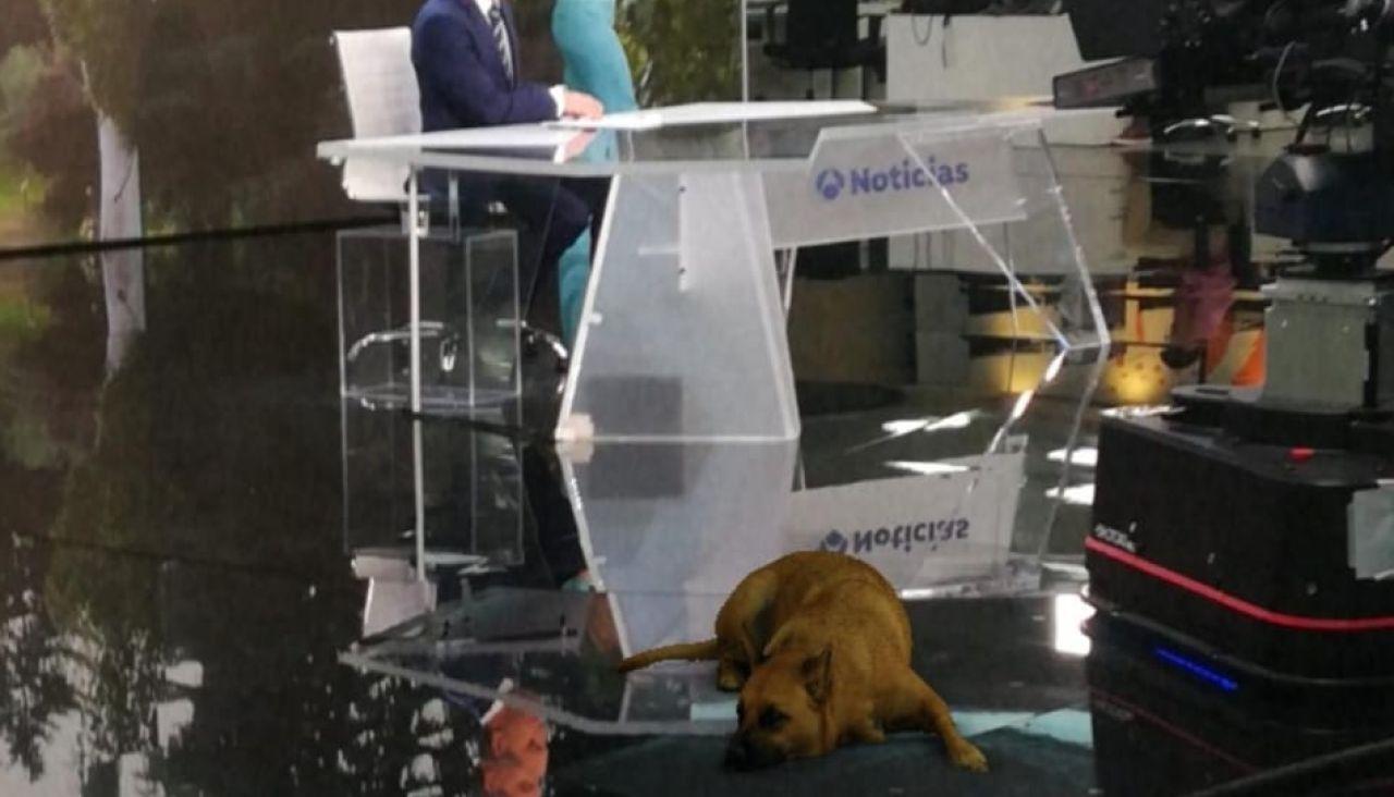 Shasa dog se cuela en el informativo de Antena 3