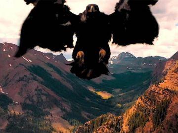 Águila atacado por un dron