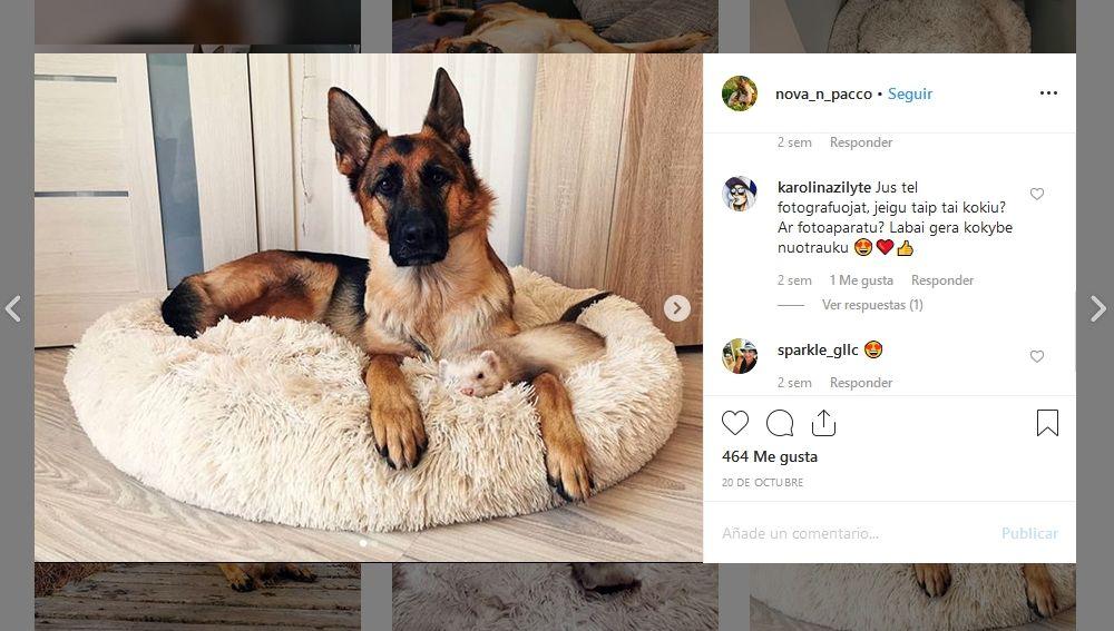 Amistad entre una perra y un hurón