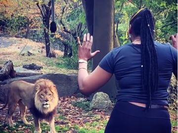 Mujer baila frente a leones en Nueva York