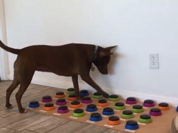Stella, el perro que habla