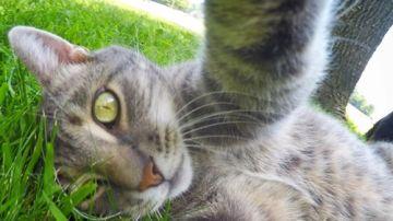 Manny el gato 'selfie'