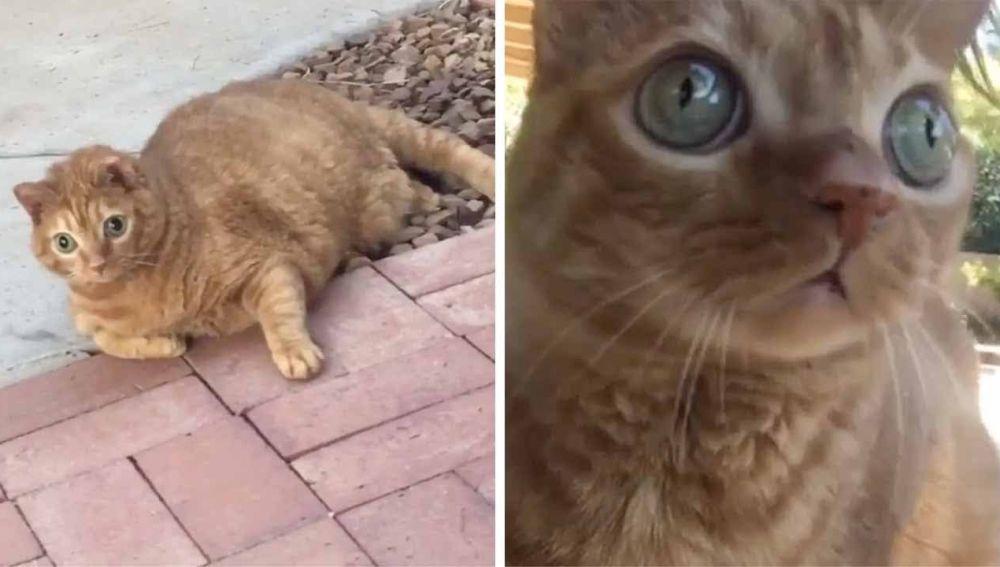 Potato el gato