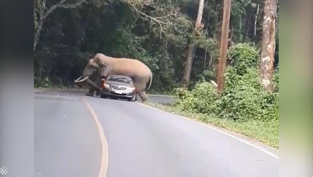 Un elefante aplasta un coche en Tailandia