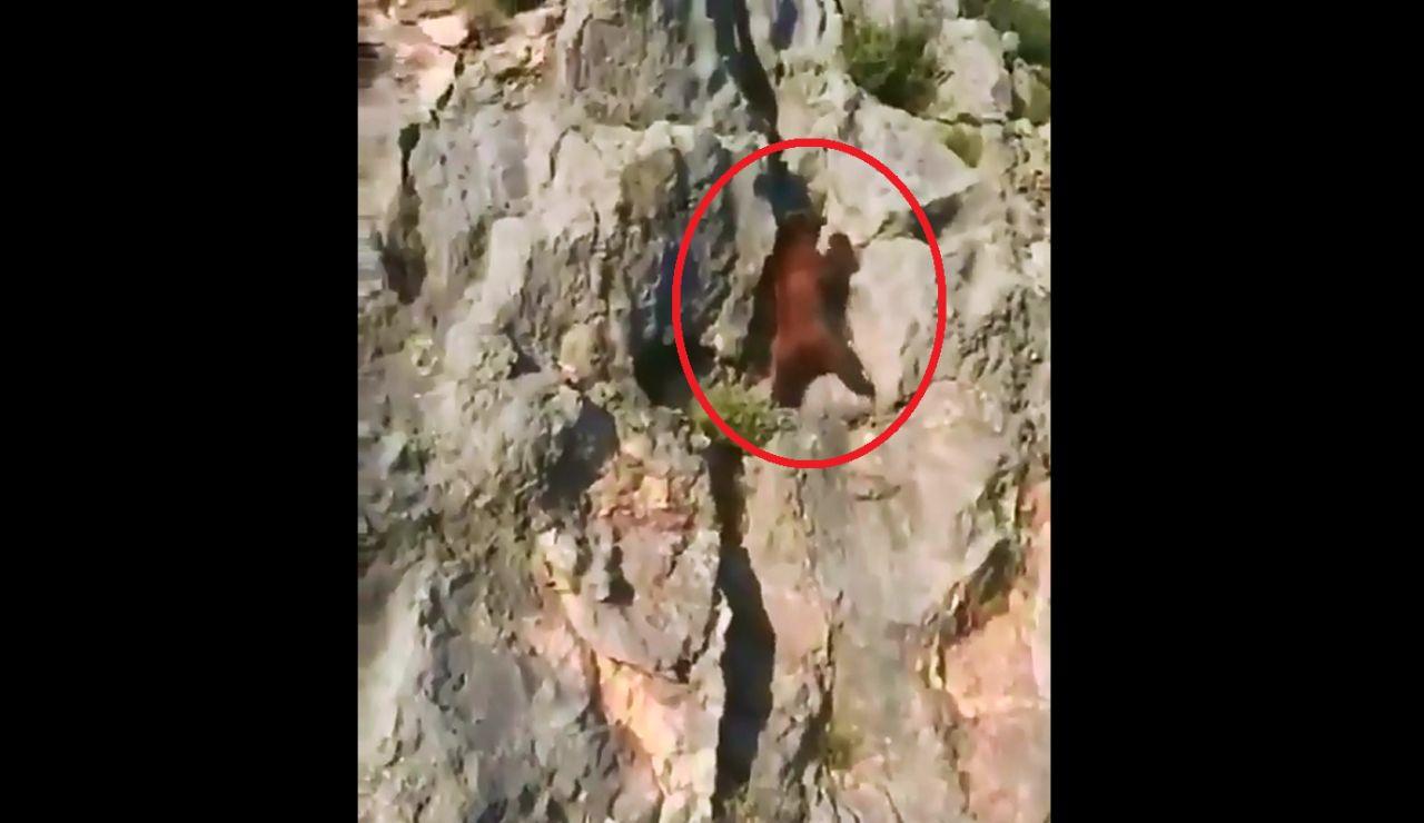 Un oso trepa a toda velocidad por una pared rocosa