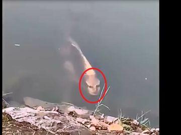 El pez con rostro humano grabado por un turista en China