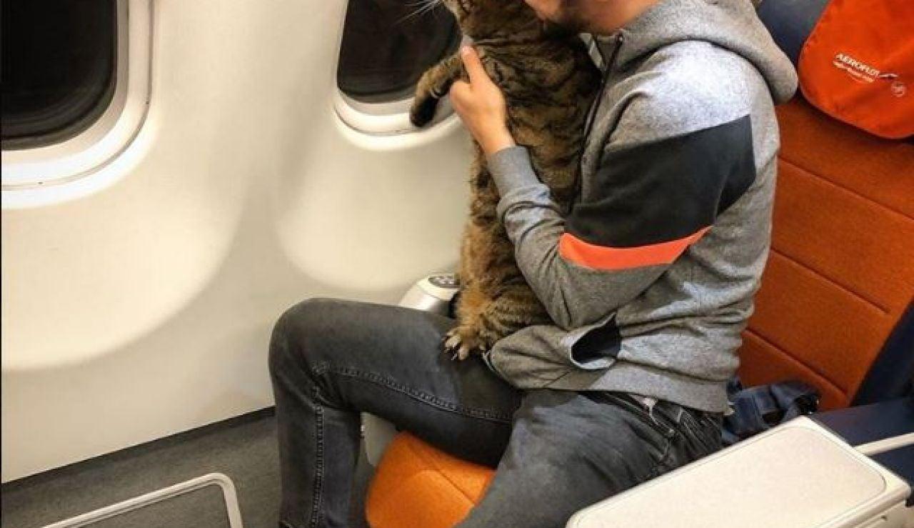 Un pasajero cuela en la cabina del avión a su gato, que pesaba demasiado para volar