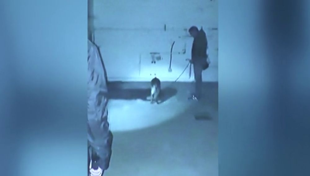 Así fue el momento en el que Dalton, el perro policía, encontró el cadáver de Diana Quer