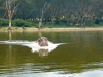 Hipopótamo ataca a una barca