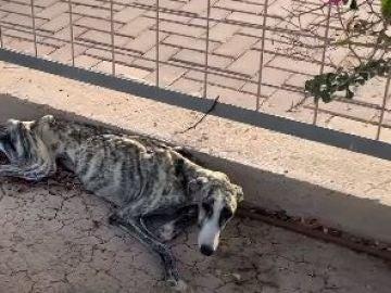 Imagen de Matilda cuando fue encontrada abandonada en la calle