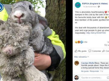 Conejo rescatado