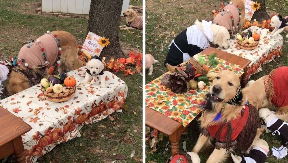 Perros celebran acción de gracias