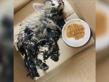 El gato tras ser encontrado por la veterinaria