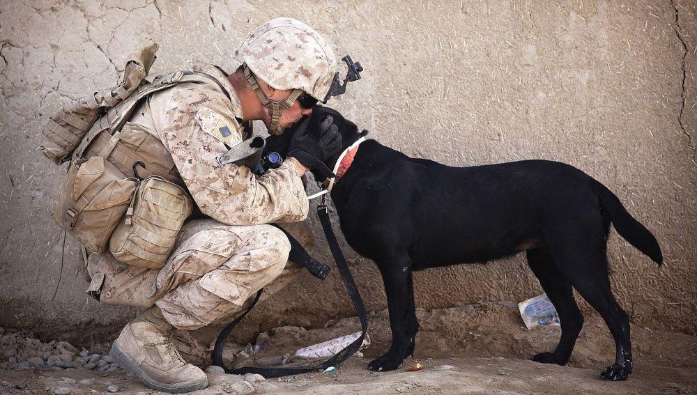 Soldado junto a un perro (archivo)