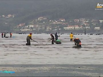 Las intensas lluvias en Galicia harán que suba el precio del marisco esta Navidad