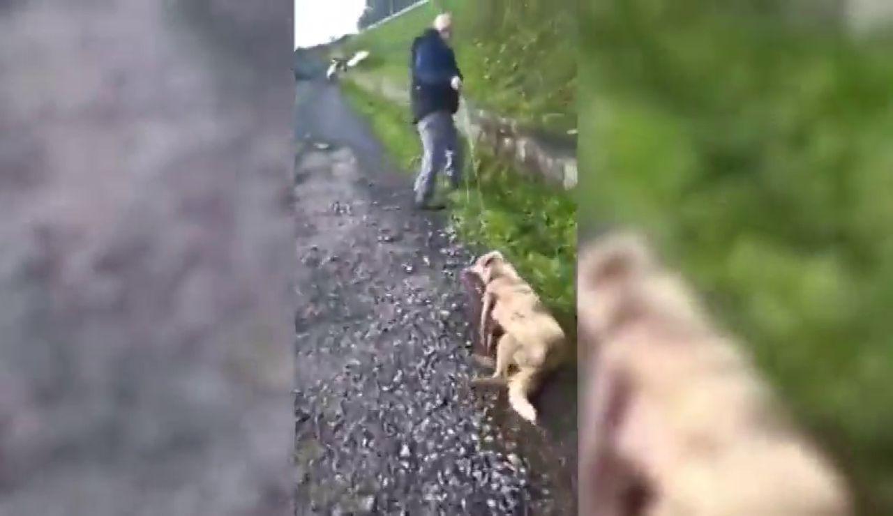 """Un cazador dispara y golpea a su perra porque """"puede pegar tiros a quien le sale de los cojones"""""""