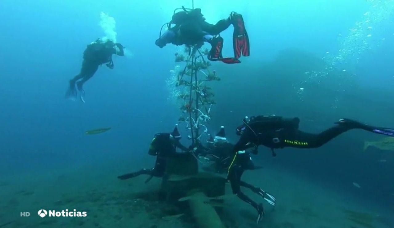 Instalan un árbol biodegradable de Navidad en las profundidades del mar en Tenerife