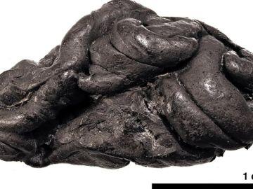 Corteza de abedul utilizada para mascar en la Prehistoria